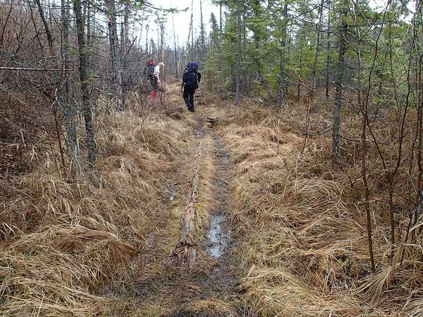 Kek Wetland walk near Mine Lake